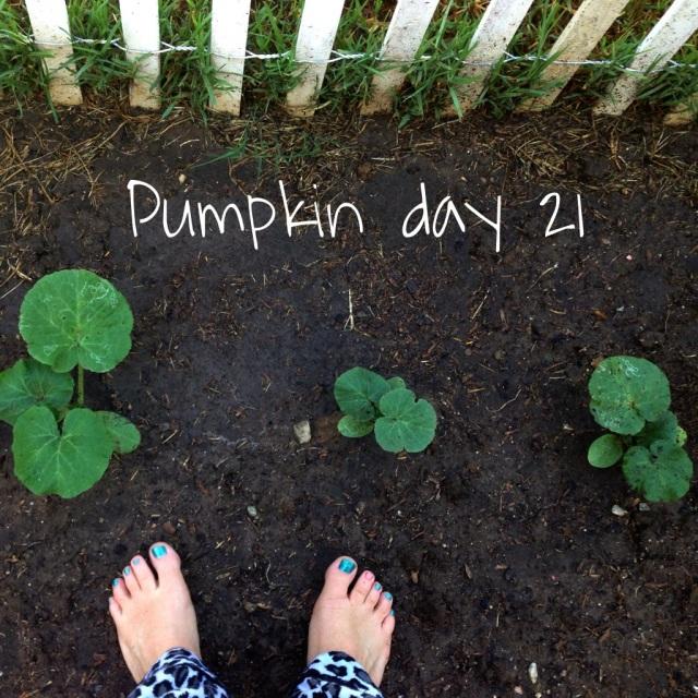 pumpkin day 21